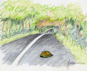 BoxInThe Road
