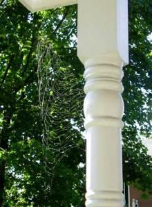 The Amazing Half-Woven Web