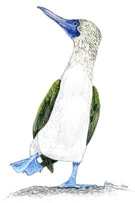 bluefootedbooby