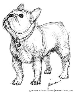 how to draw a realistic french bulldog
