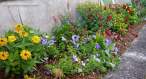 Flowers-July2