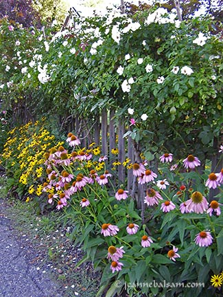 Flowers-JulyB-2