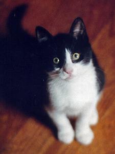 Claude-Kitten2
