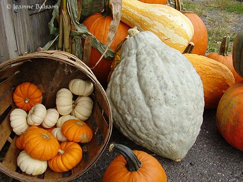 Farmstand-Gourds2