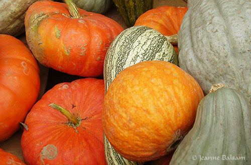 Farmstand-MoreGourds2