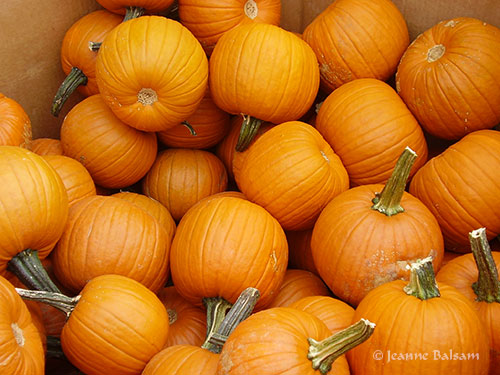 Farmstand-Pumpkins2