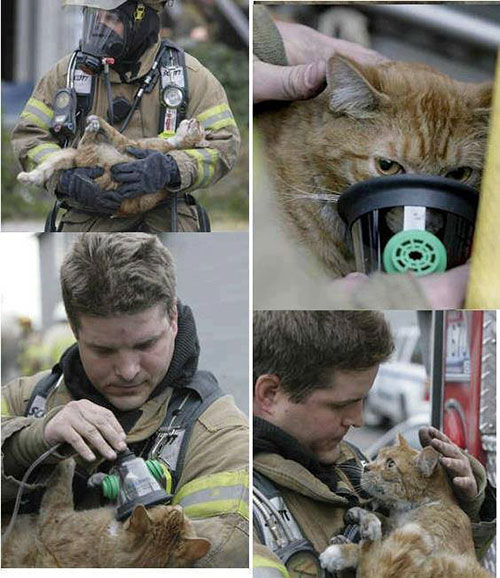 Cat-Fireman-OxygenMask2