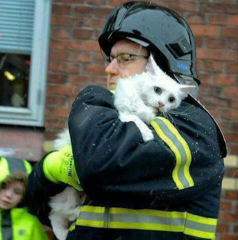 Cat-Fireman2