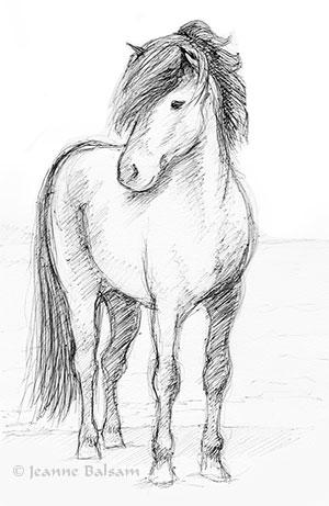 JBalsam-Horse-WatersEdge2