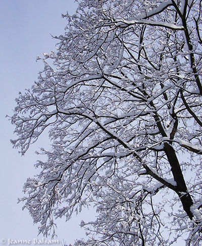 SnowFeb4-SecondTree2