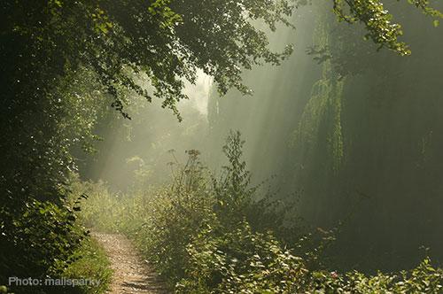 MistyForest2
