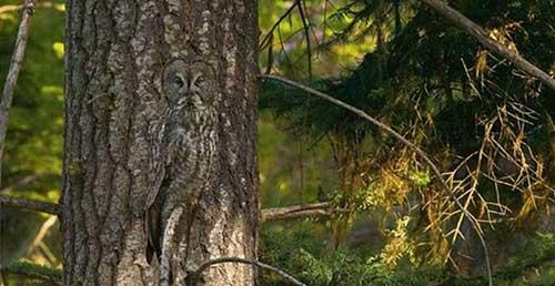Owl13-b