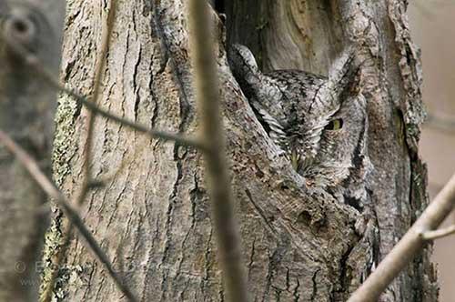 Owl14-b