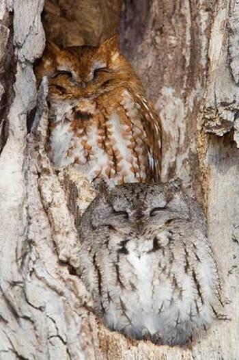 Owl9-b