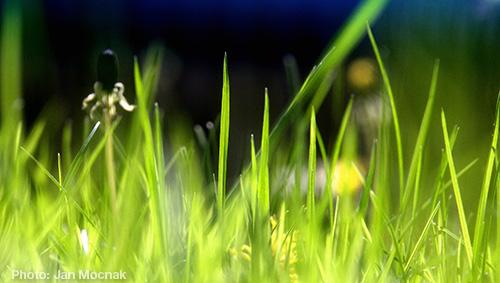 Grass-JanMocnak2