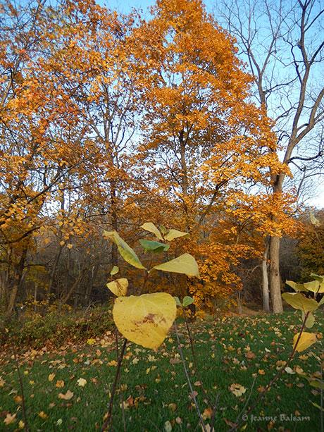 walknov5-leafandtrees2